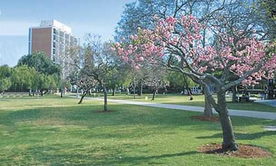 Campus der California State University Long Beach