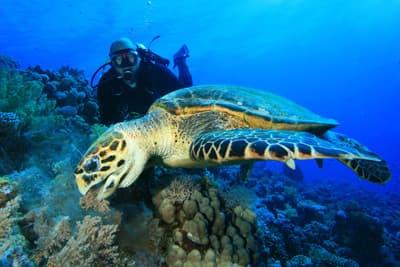 Meeresbiologe Studium
