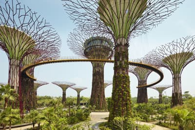 """Supertrees"" im ""Gardens by the Bay"" in Singapur"